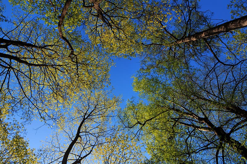 Green and brown trees under blue sky during daytime