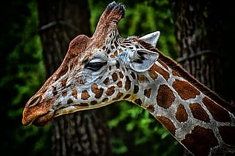 Brown and white giraffe in forest during daytime