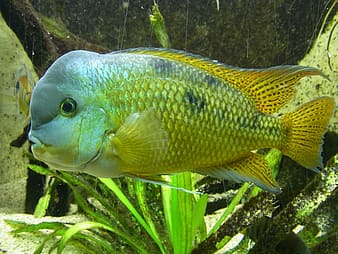 Gray and beige pet fish