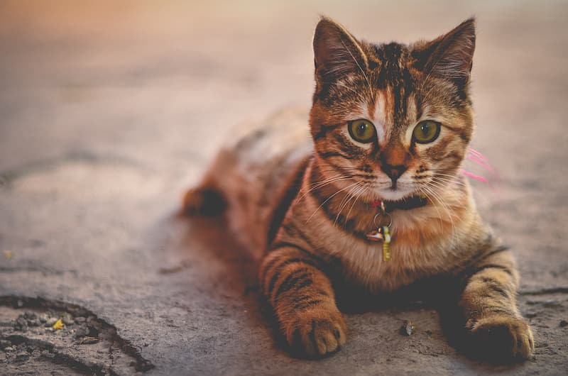 Brown tabby cat on gray concrete floor