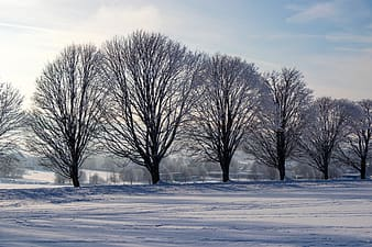 winter, wintry, nature, trees, snow, backlighting, hoarfrost, snow landscape, landscape, mood