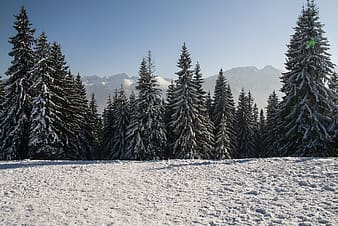 tree, winter, snow on the tree, frost, coniferous, snow, landscape, mountains, nature, view