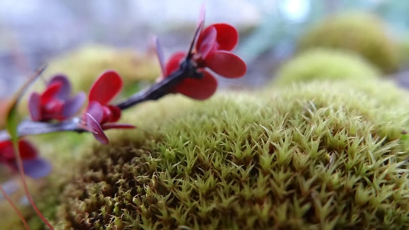 Red flower on green grass during daytime