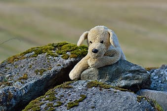 Selective focus photo of brown dog plush toy on rock