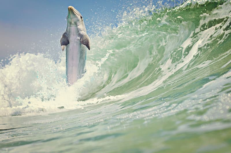 Photo of a dolphin over ocean wave