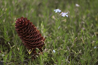 Brown pinecone beside white petaled flower