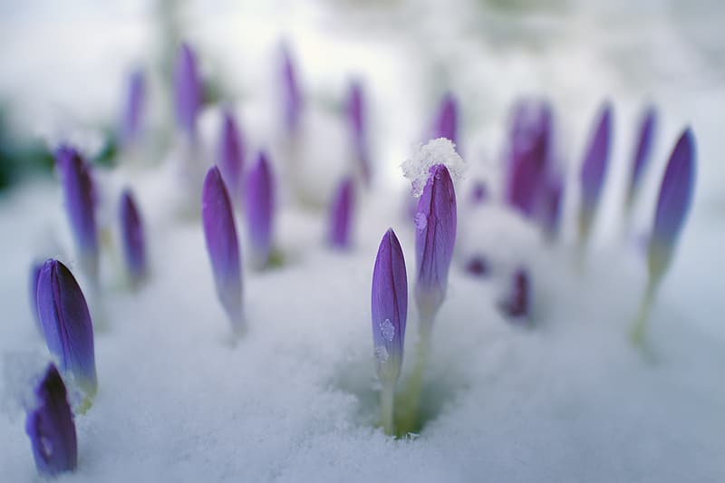 Selective focus photography of purple flower nuds
