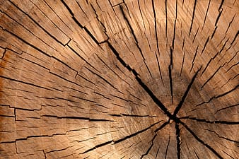 untitled, background, brown, circle, cut, detail, log, lumber, nature, old