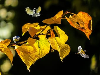 White and blue bird on brown leaves