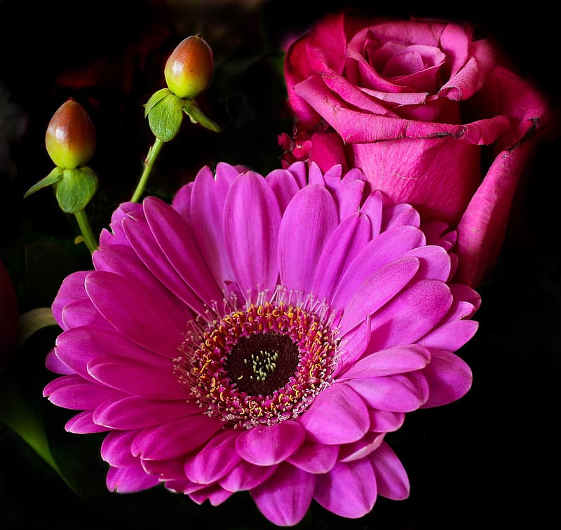 Closeup photo of red rose and Gerbera daisy flowers