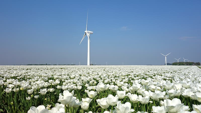 White windmill on green grass field under blue sky during daytime