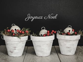 Photo of three berries plants in white pots on white surface