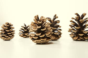Five brown pine cones on top of white surface