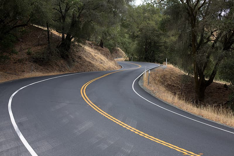 Curved concrete road surrounded with trees