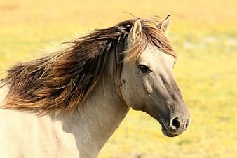 Close up photo of gray horse