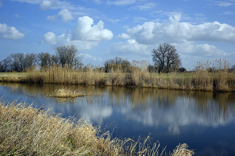 Brown grass near body of water under blue sky during daytime
