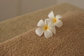 Two white and yellow flowers on brown textile