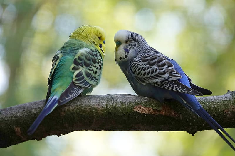 Green white and blue bird on brown tree branch