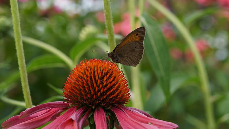 Brown butterfly perched on red flower in close up photography during daytime