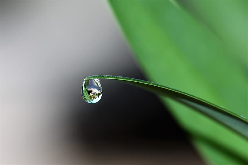 Green leaf plant with water dew