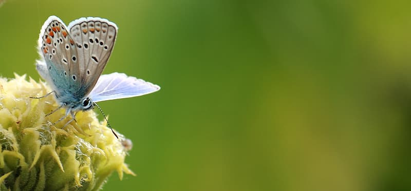 Common blue butterfly perched on yellow petaled flower selective focus photography