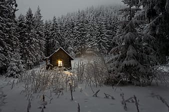 Brown wooden house between pine trees under snow weather