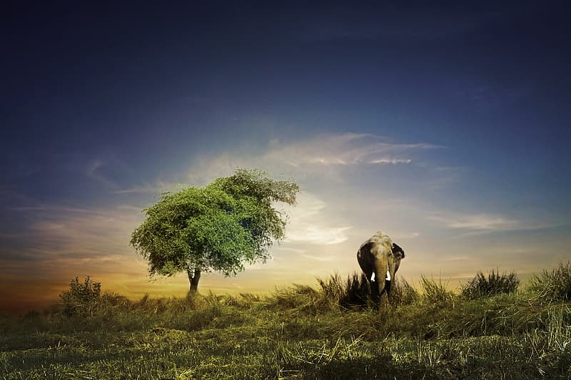 Gray elephant on green grass field under blue sky at daytime