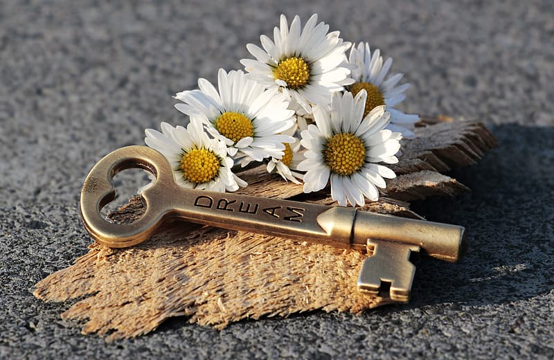 White daisy flowers on brown wooden handle