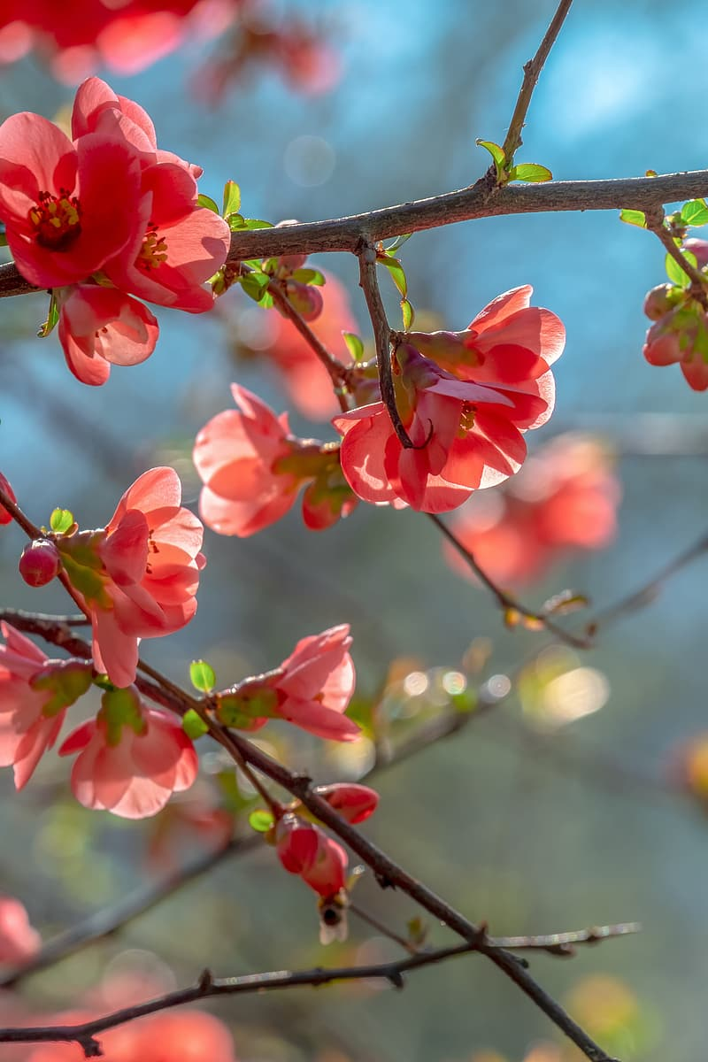 Pink flowers on brown tree branch