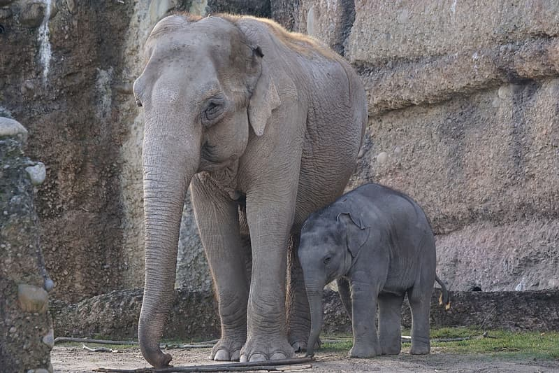2 gray elephants on brown ground during daytime