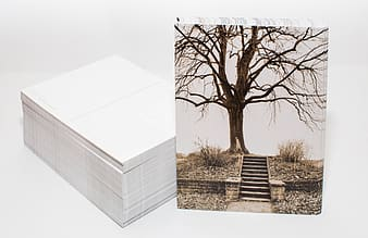 Bare tree and white box collage