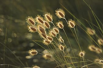 Focus photography of brown grass
