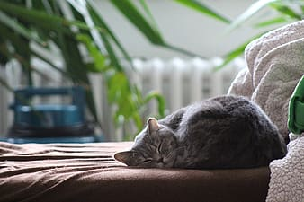 Gray cat laying on brown mattress