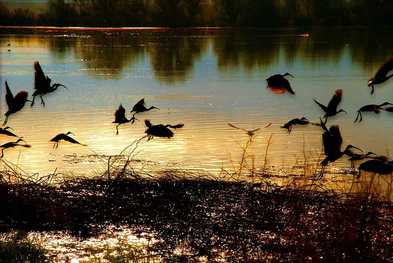 Birds on body of water during daytime