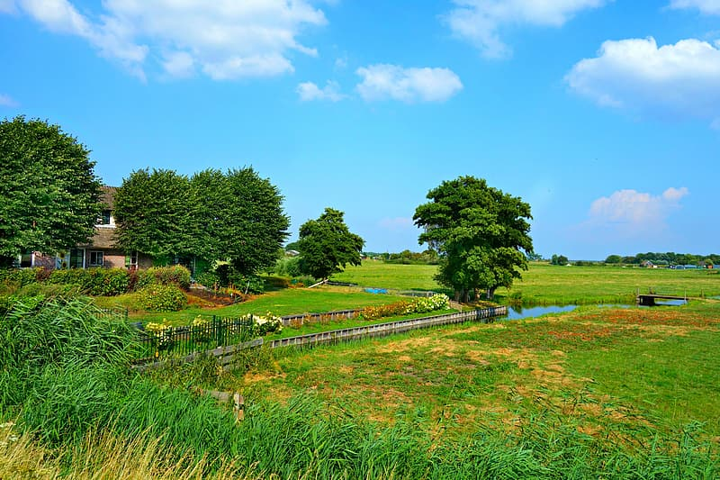 Green grass field with green trees under blue sky during daytime