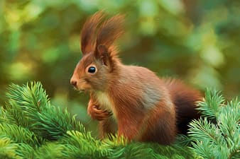 Selective focus photography of brown squirrel on green pine tree
