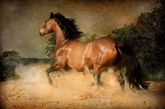 Photo of running horse