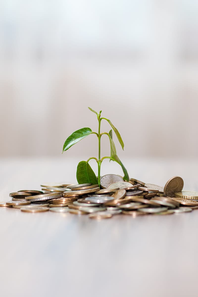 Green leafed plant beside coins