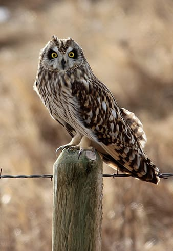 Brown owl on brown wooden post during daytime