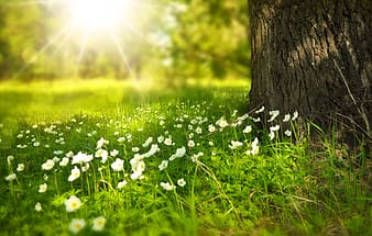 White petaled flowers in grass beside tree under sunshine
