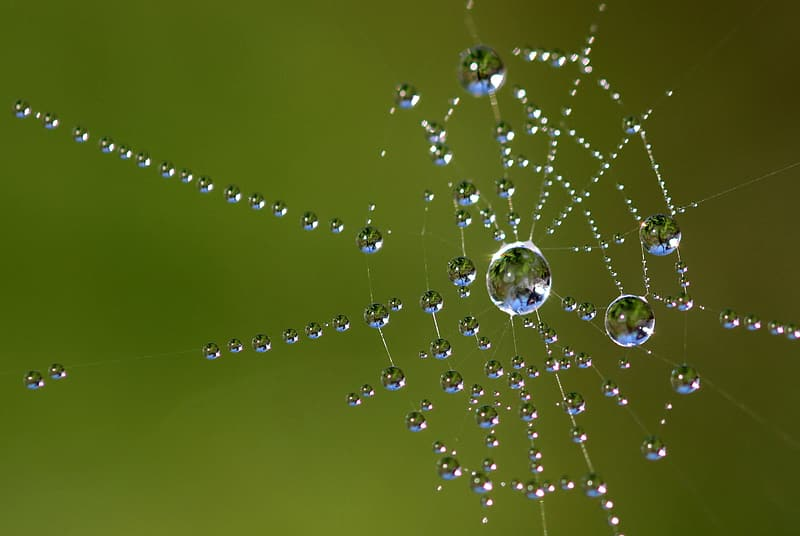 Water dew on spider web closeup photography