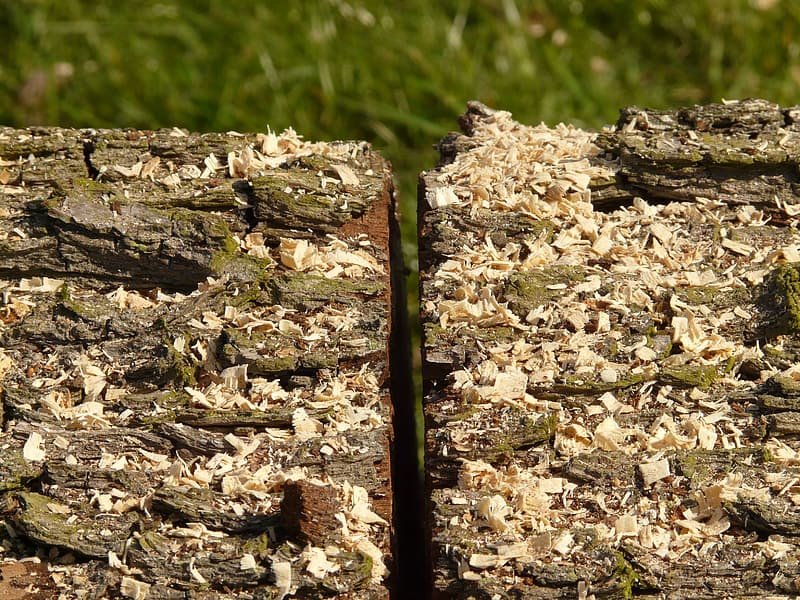Brown tree log on green grass field during daytime