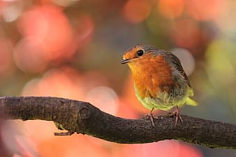Orange and gray bird perched on wood twig
