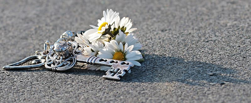 White and yellow daisy flowers on gray concrete floor