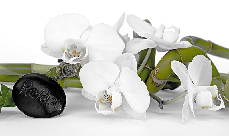 Shallow focus of white orchid on white table