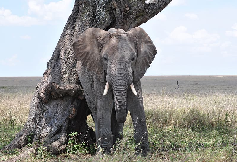 Gray elephant beside tree