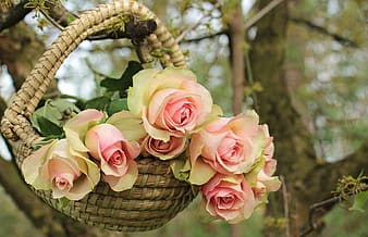 Pink-and-green roses on basket