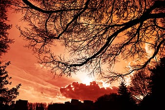 Low angle photography of silhouette of trees during golden hour