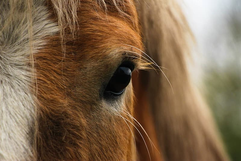 Macro photo of horse eye