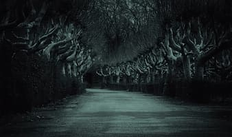 Grayscale photo of trees and road